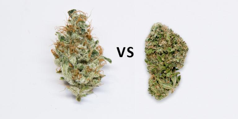 Medical marijuana card's