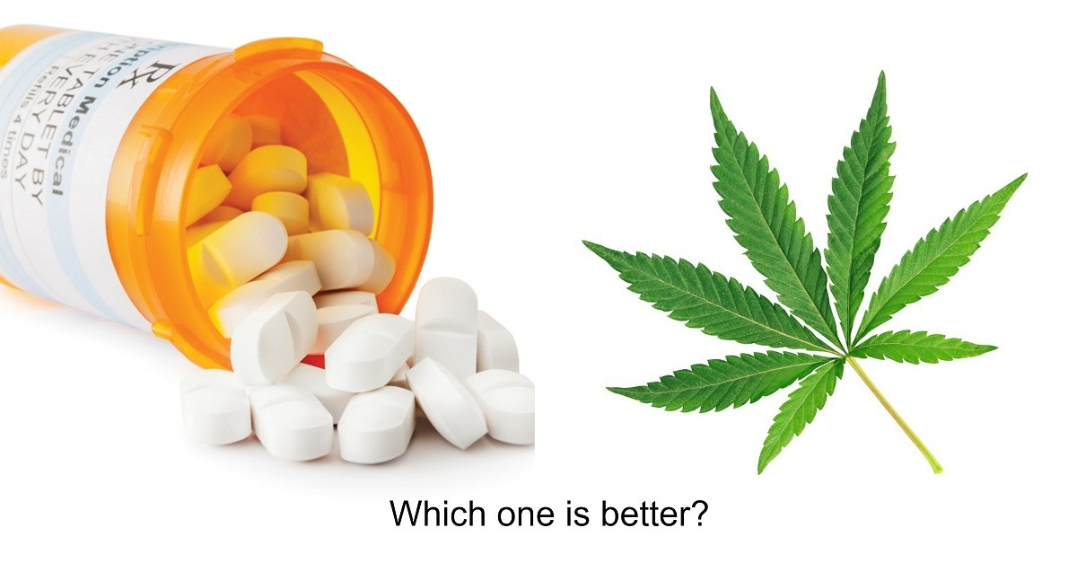 Cannabis Compared to Opioids