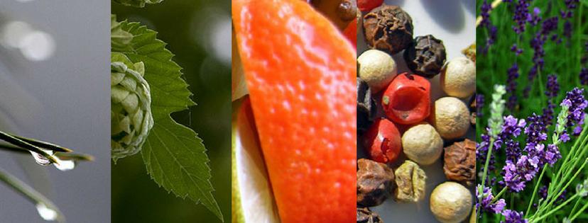 terpenes aromatherapy