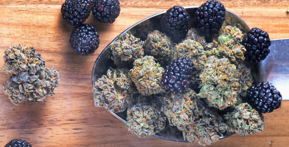 blueberry terpins