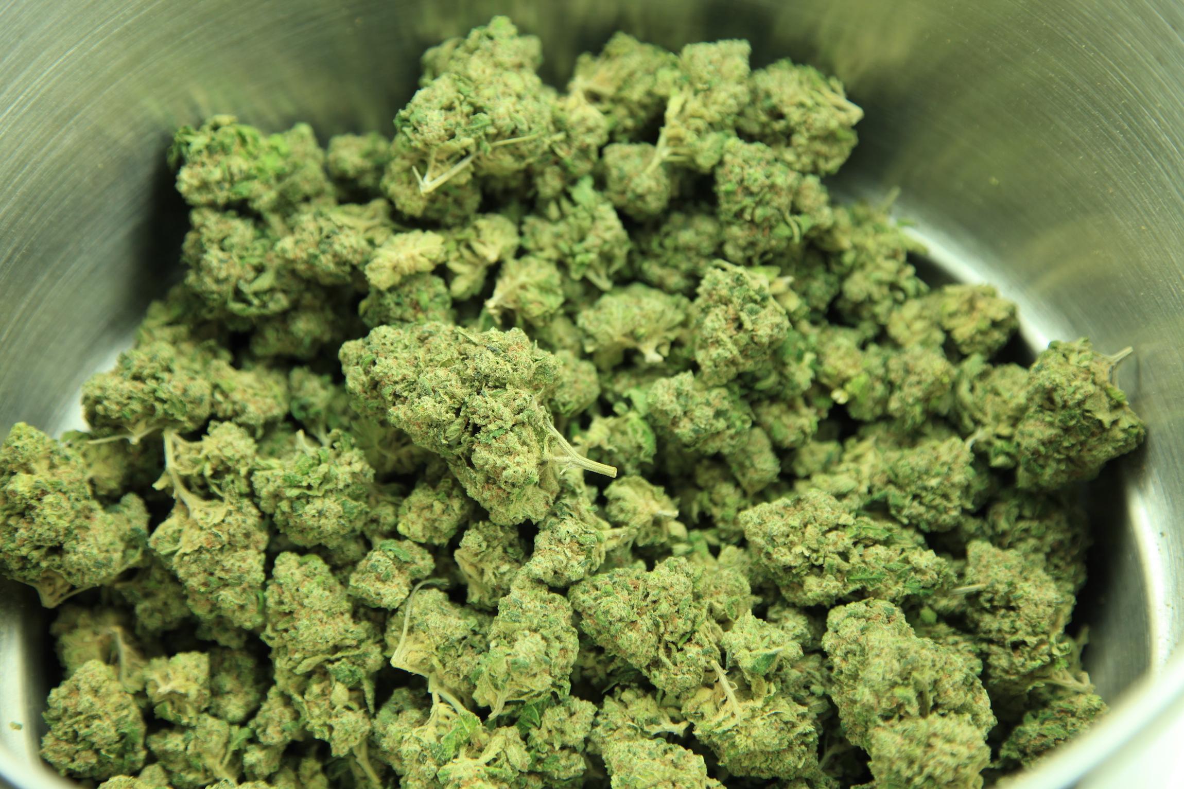 Understanding the Difference Between Marijuana Strains