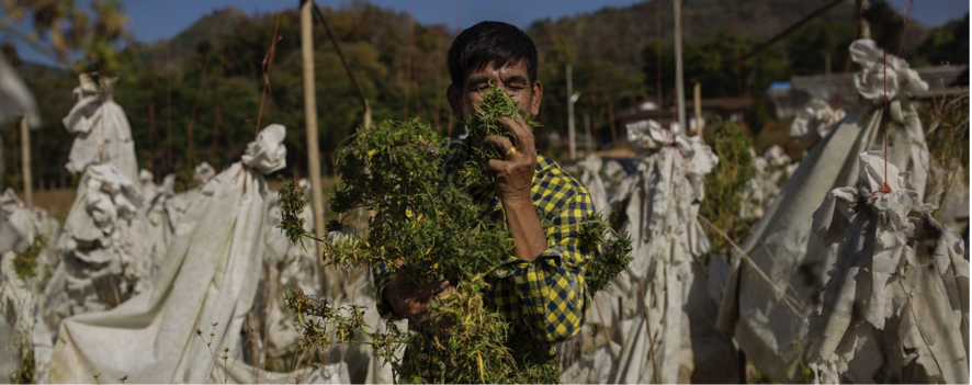 Thailand is on its way to becoming the first Asian country to legalize medical cannabis