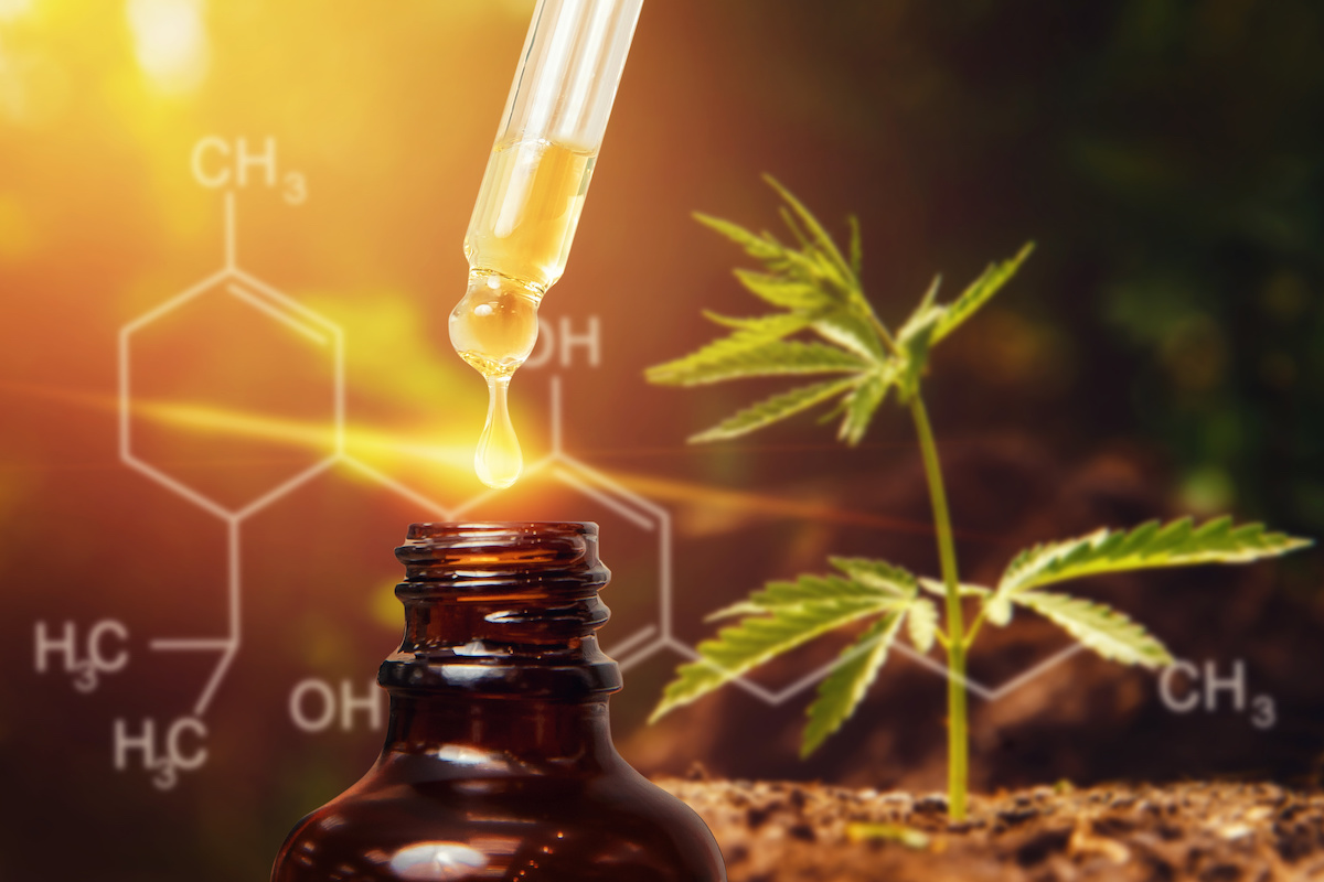 Cannabinoids and the Endocannabinoid System: A Match Made in Heaven