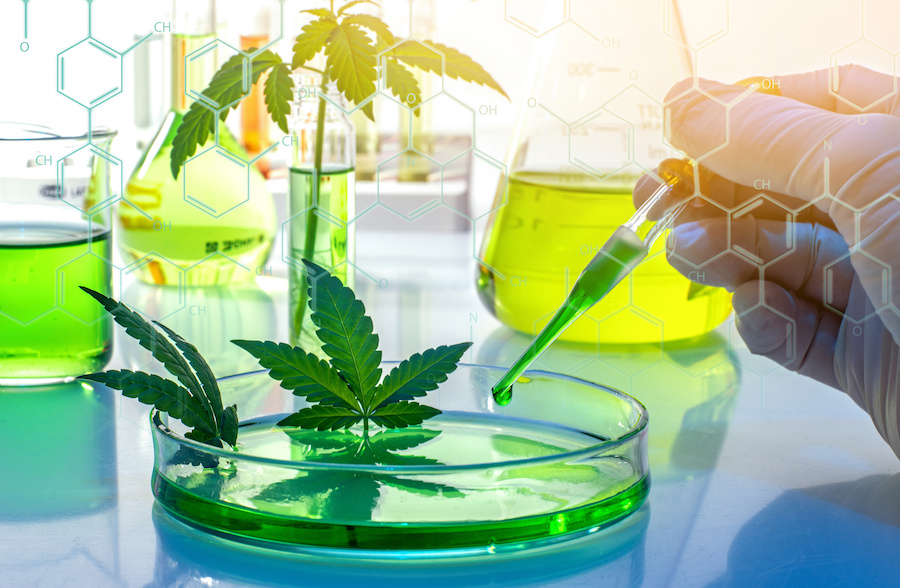 An Inside Look at the Harsh Restrictions for Cannabis Research in the US