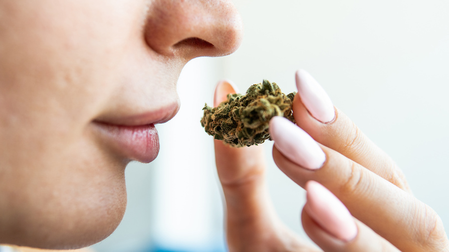 First-Ever Odorless Marijuana Claimed By Canadian Startup