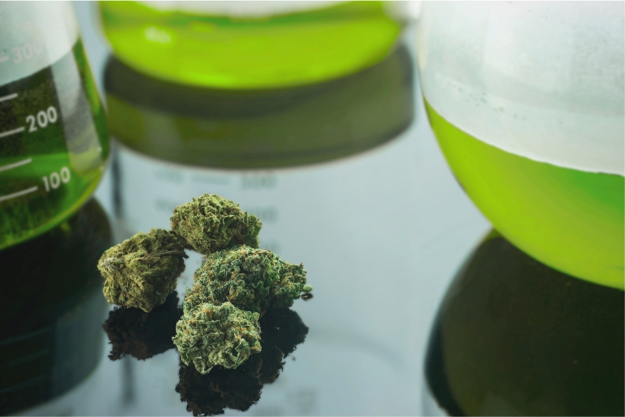 Recent Cannabis Research Studies and Discoveries You Should Know About