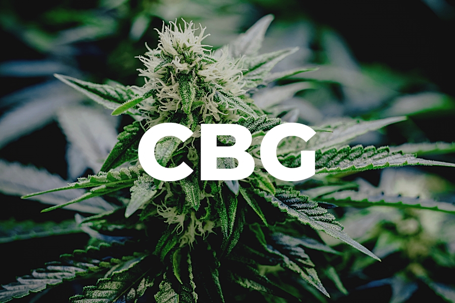 What You Should Know About CBG and Its Health Benefits