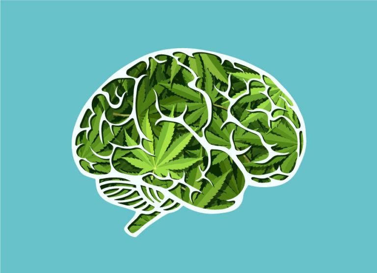 brain on cannabis