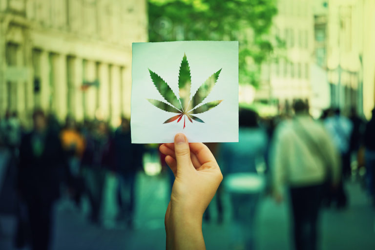 hand holding pic of cannabis leaf