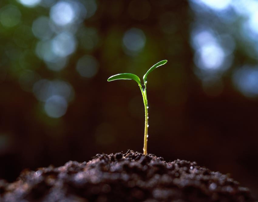5 Plants Besides Cannabis That Produce Cannabinoids