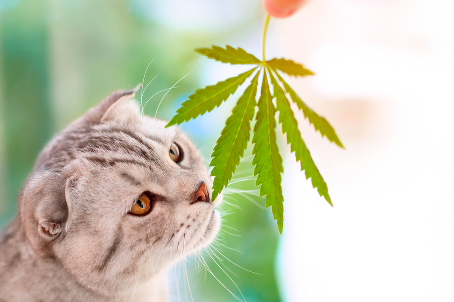CBD for Pets: Does it Actually Work?
