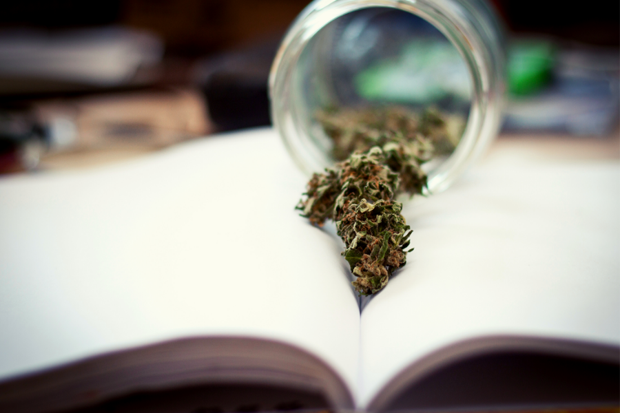 7 Universities That Offer A Higher Education in Cannabis Studies