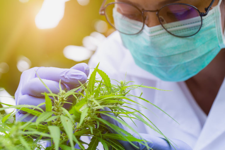 Marijuana Researcher