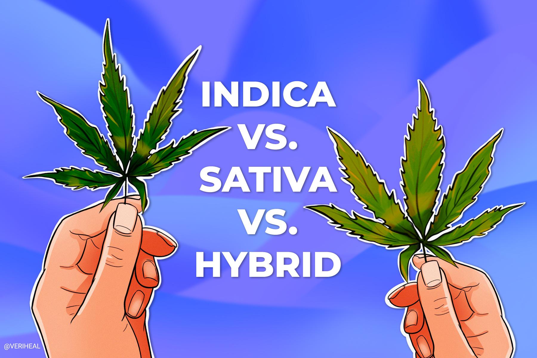 Understanding Indica vs Sativa vs Hybrid Cannabis Strains