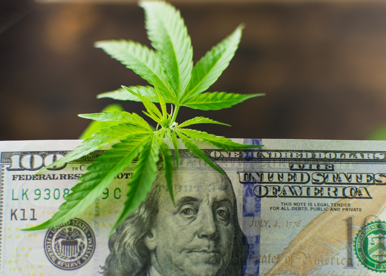 Find Out How People Save Thousands of Dollars on Legal Cannabis
