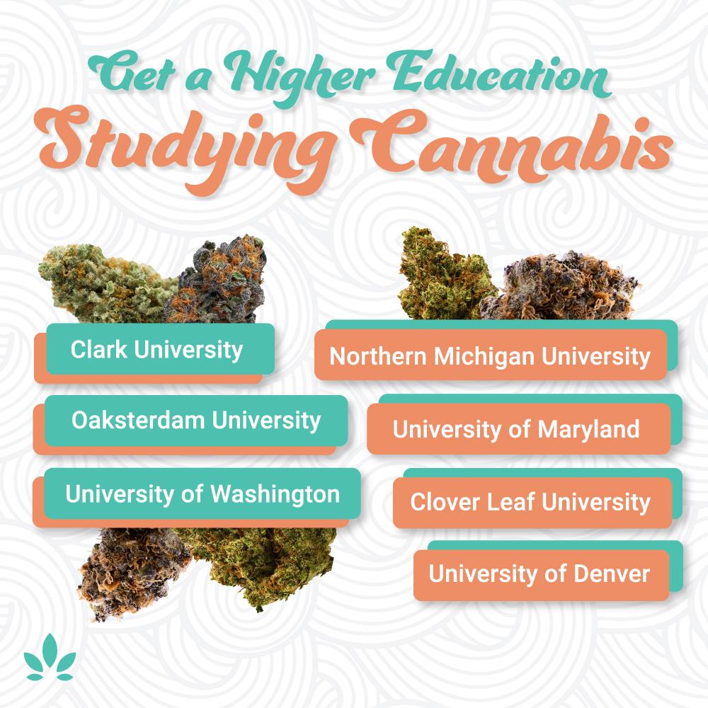 cannabis schools