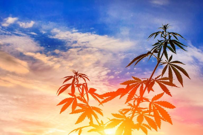 Marijuana sunset