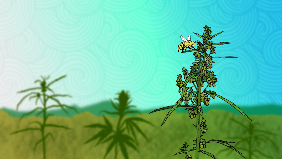 Could Cannabis Save The World's Dwindling Bee Population?