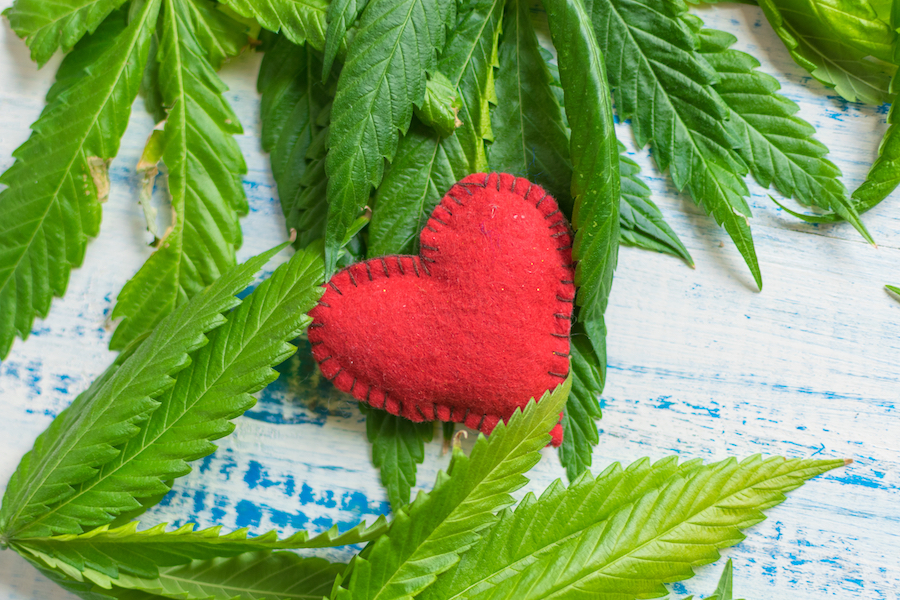 Experts Warn That Cannabis Can Interfere With Certain Heart Medications