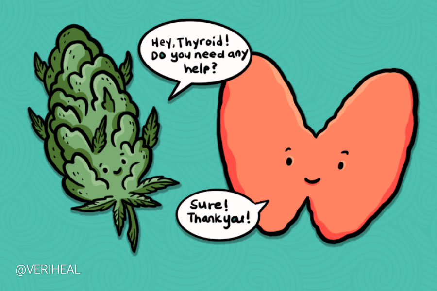 Cannabis Strains That Can Help With Thyroid Conditions