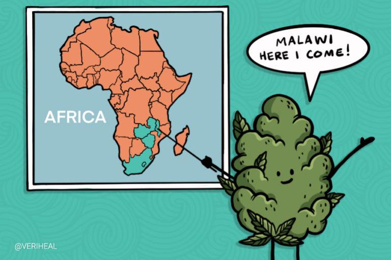malawi-legalizes-cannabis