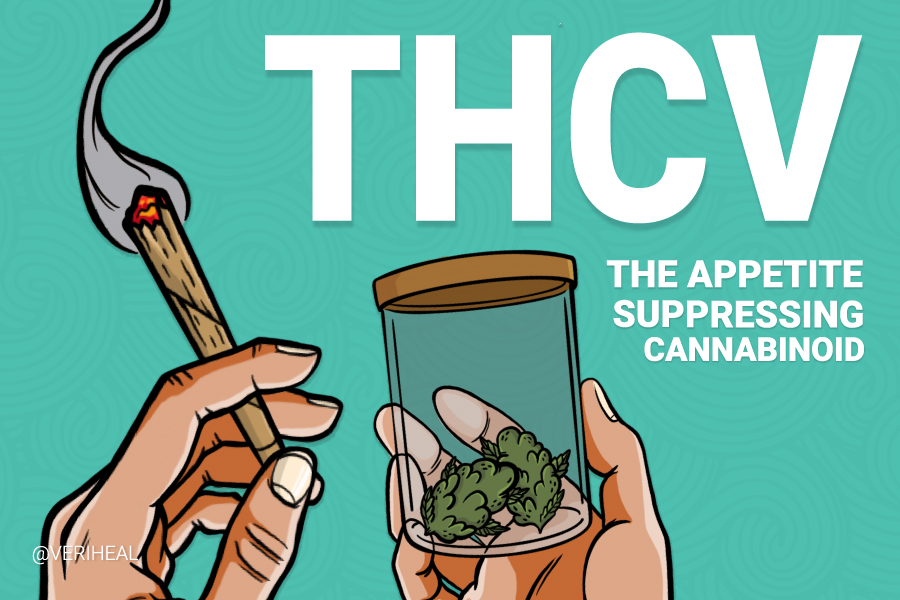 Exploring THCV: The Energizing and Appetite Suppressing Cannabinoid