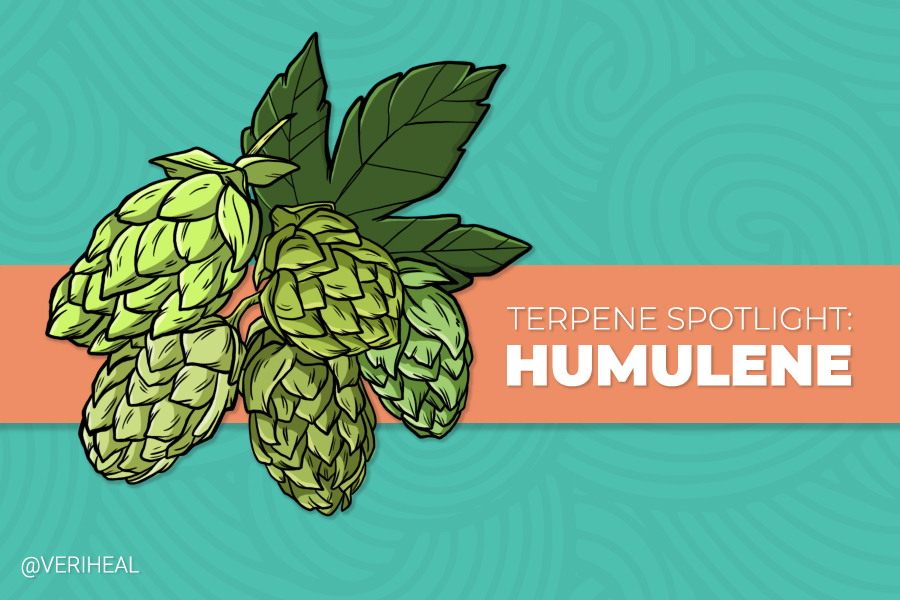 Terpene Spotlight: Accessing the Benefits of Humulene