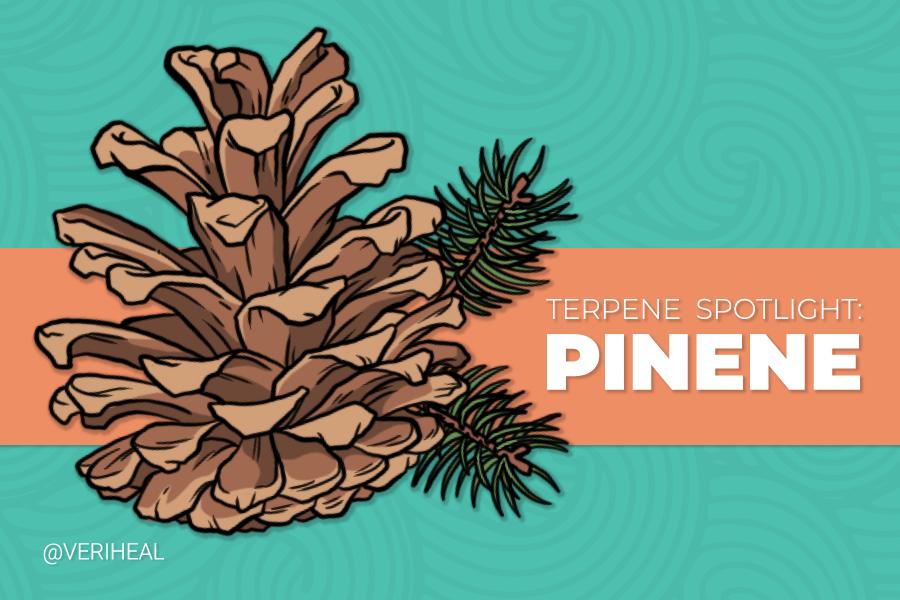 Terpene Spotlight: Discovering the Benefits of Pinene