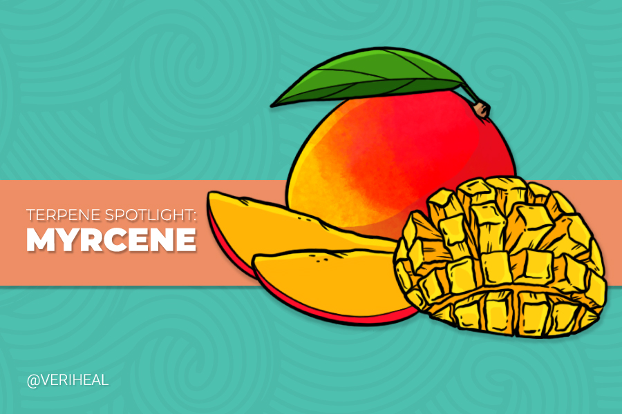 Terpene Spotlight: Explore the Benefits of Myrcene