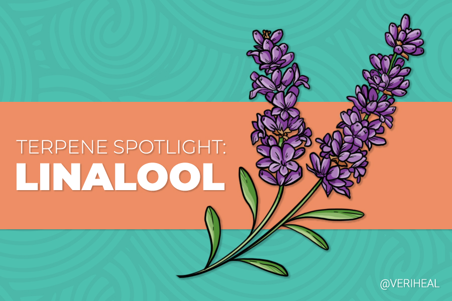 Terpene Spotlight: How Linalool Can Provide Therapeutic Relief