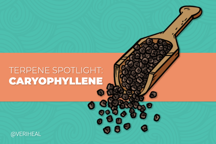 Terpene Spotlight: Using the Benefits of Caryophyllene