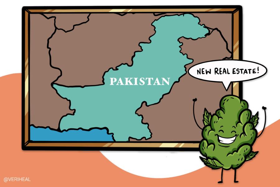 Pakistan Approves Industrial Hemp Cultivation to Enter the CBD Market