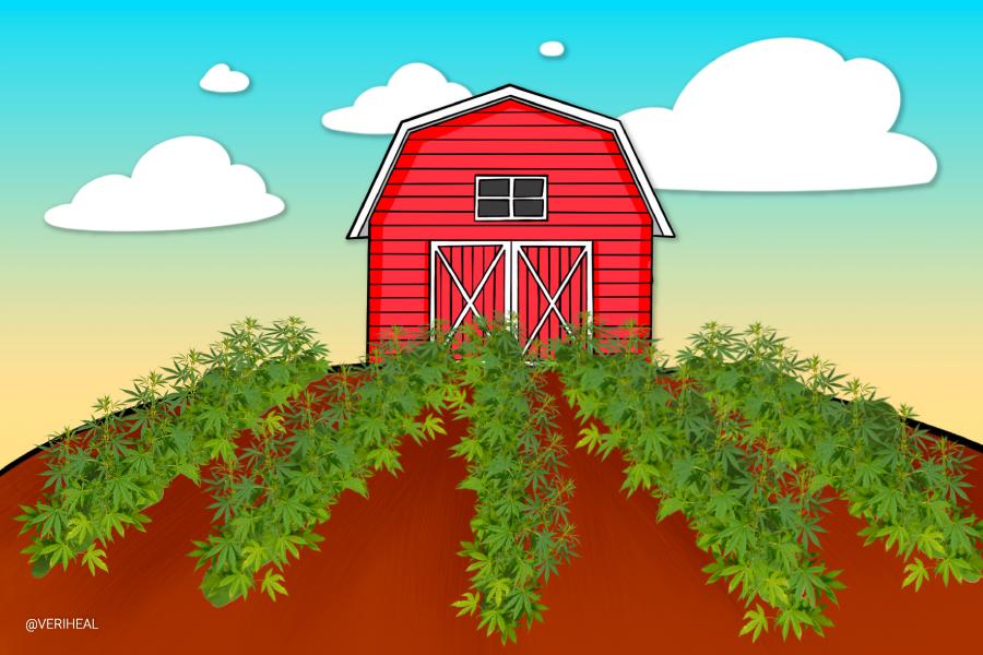 About Australia's Secret Multi-Million Dollar Cannabis Farm That's Guarded 24/7