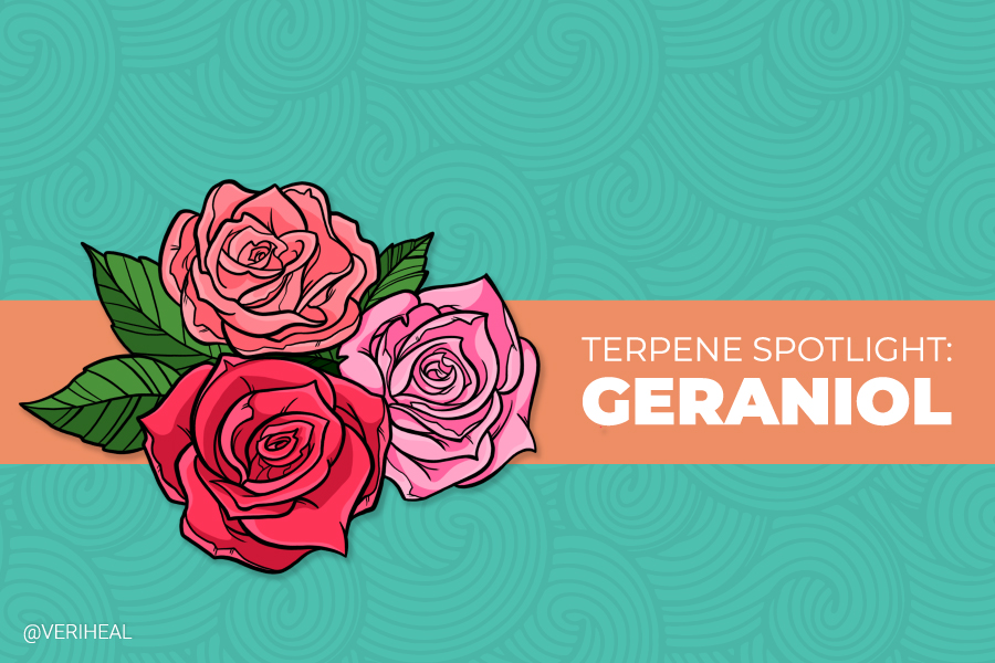 Terpene Spotlight: All Things Are Rosy With the Help of Geraniol