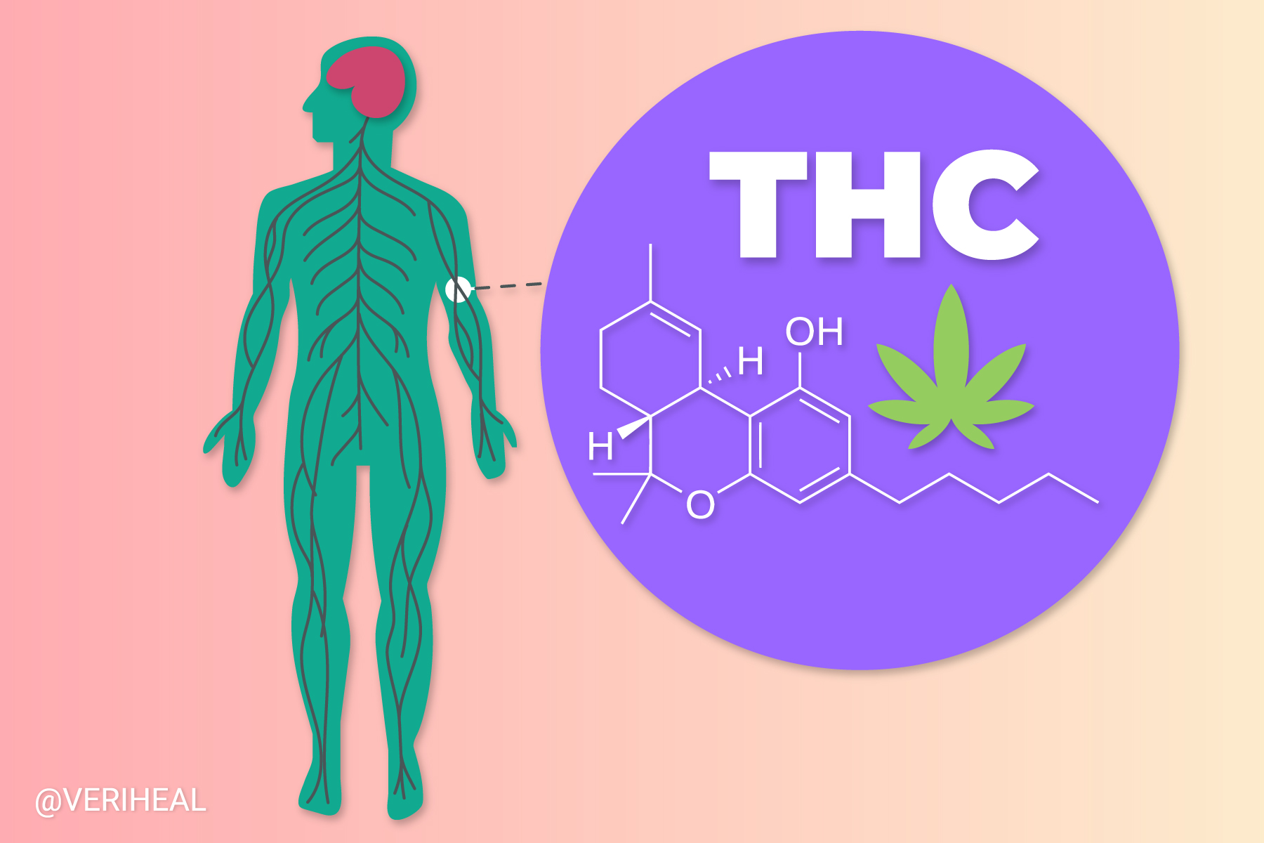 New Research Shows Interesting Discoveries on How Cannabinoids Bind To Receptors