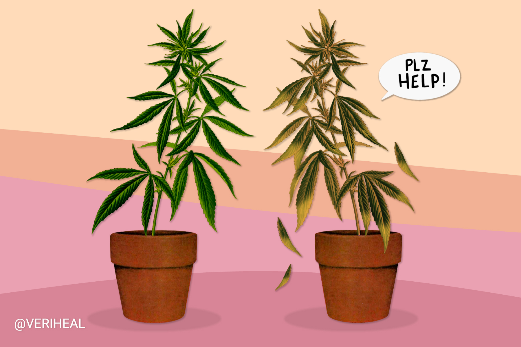Common Nutrient Issues That Occur in Homegrown Cannabis Plants
