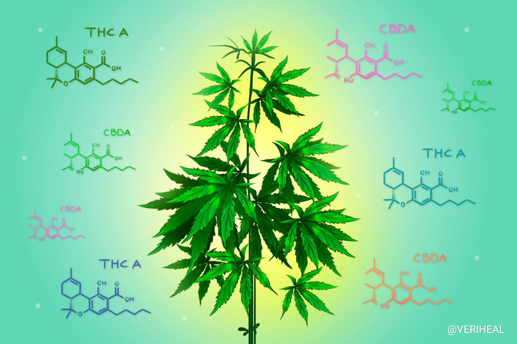 Dr. Mechoulam Explores Cannabinoid Acids and Their Benefits