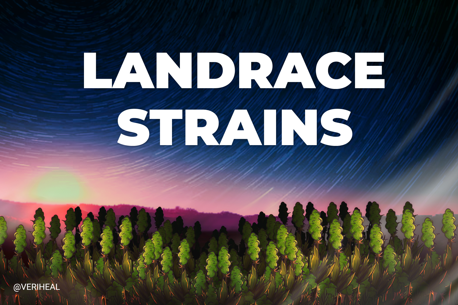 Explore the Significance of Landrace Cannabis Strains