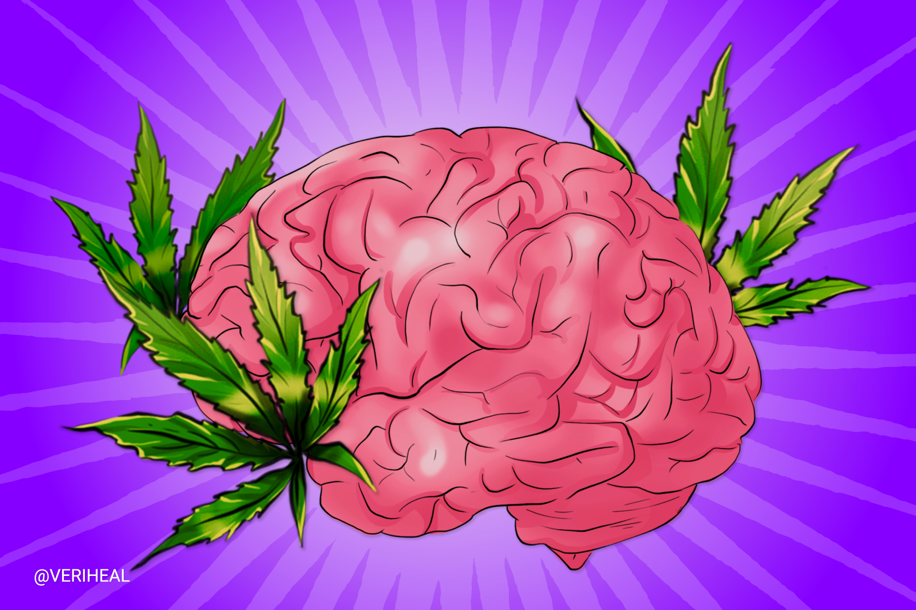 Scientists Say That Cannabis Won't Reduce Brain Cortical Thickness
