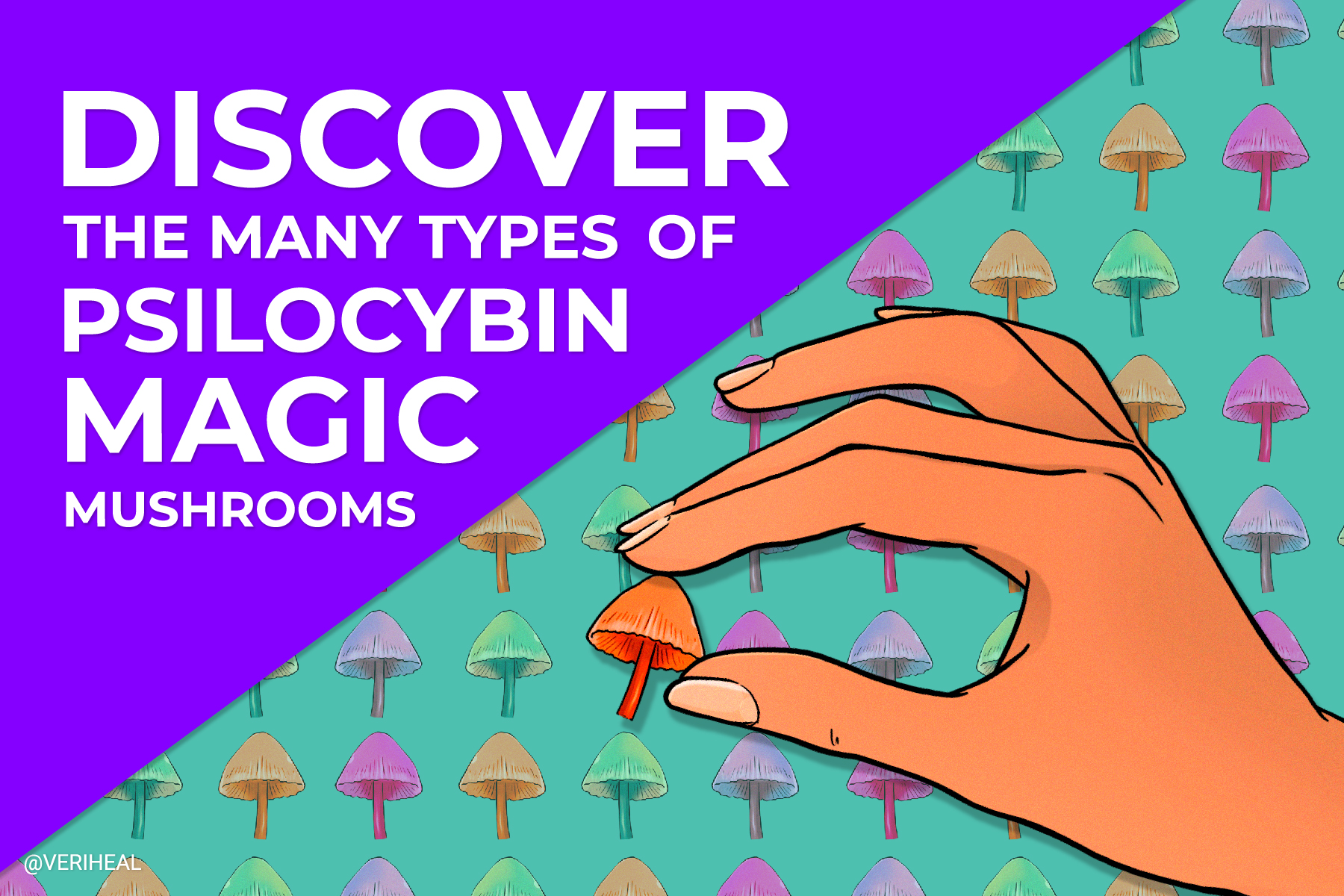 Discover the Many Types of Psilocybin Magic Mushrooms
