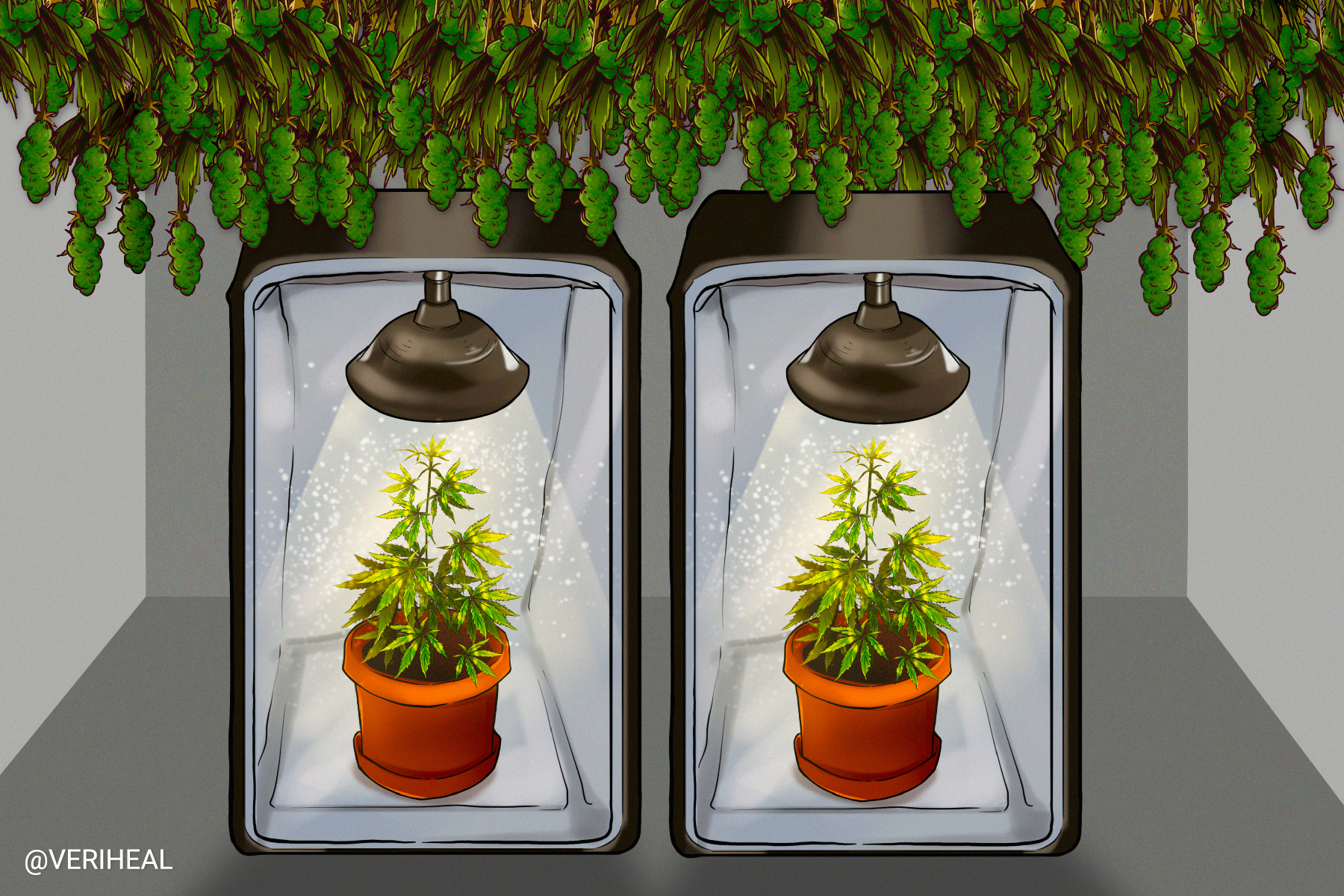 Using Cannabis Grow Tents to Succeed in Indoor Cultivation