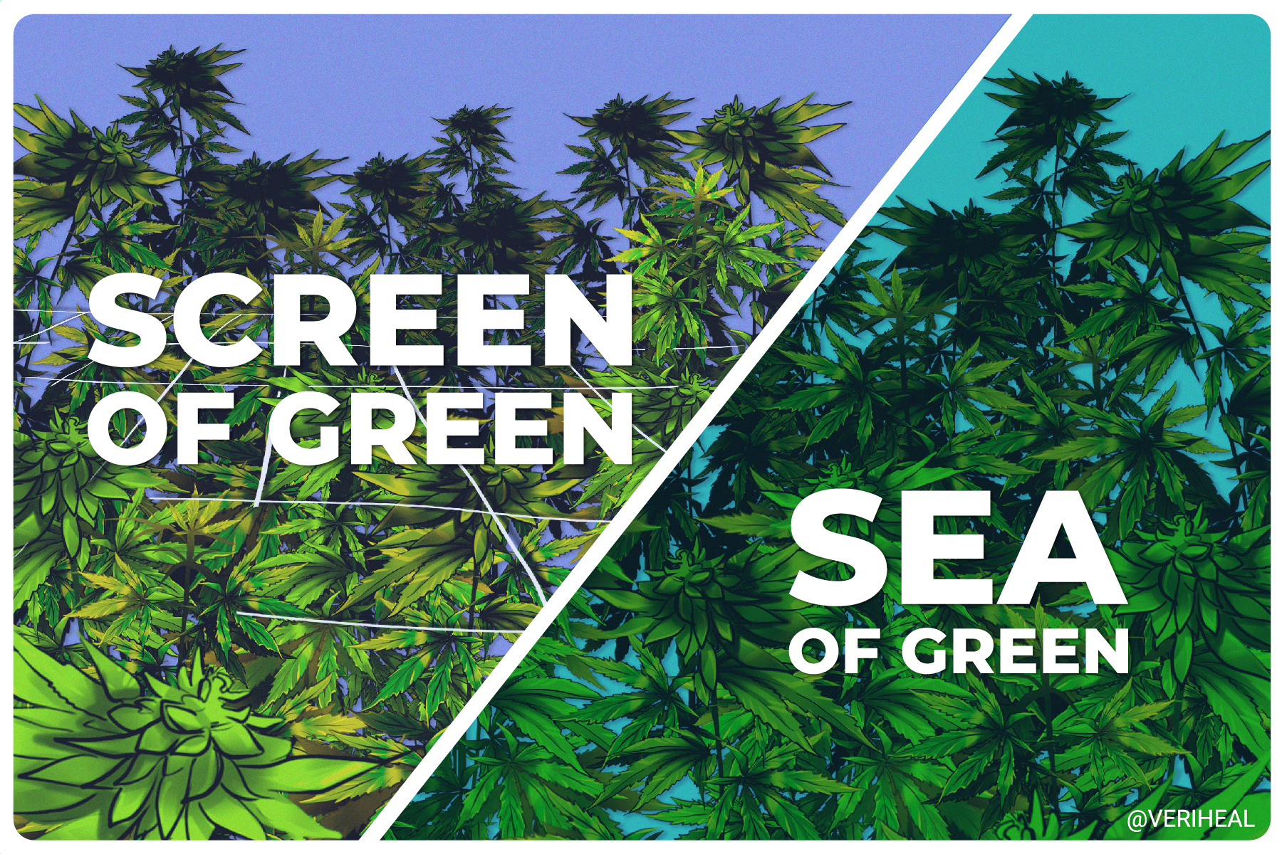 Growing Techniques: Sea of Green vs. Screen of Green