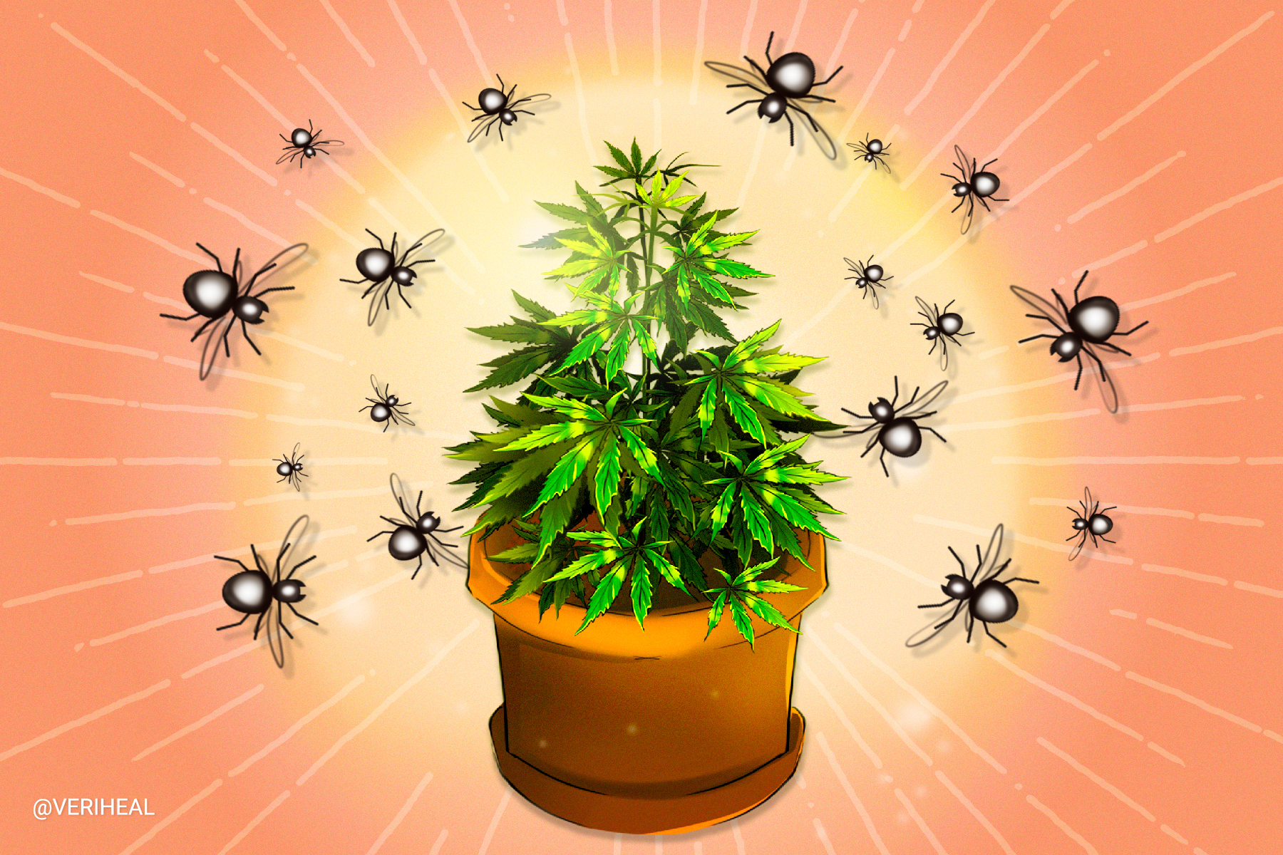 The Importance of IPM, or Integrated Pest Management Systems for Cannabis Grows