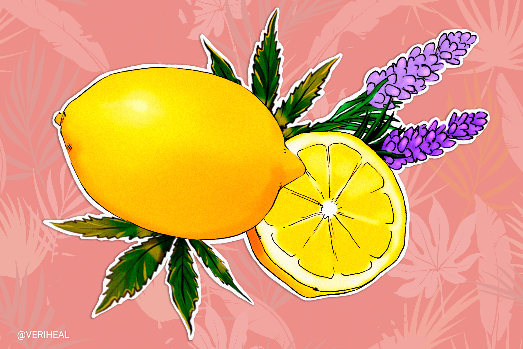 Understanding Cannabis Terpenes and Their Effects