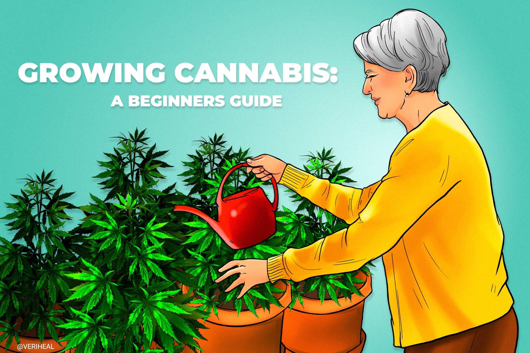 Quick Guide to Growing Cannabis Indoors for Beginners