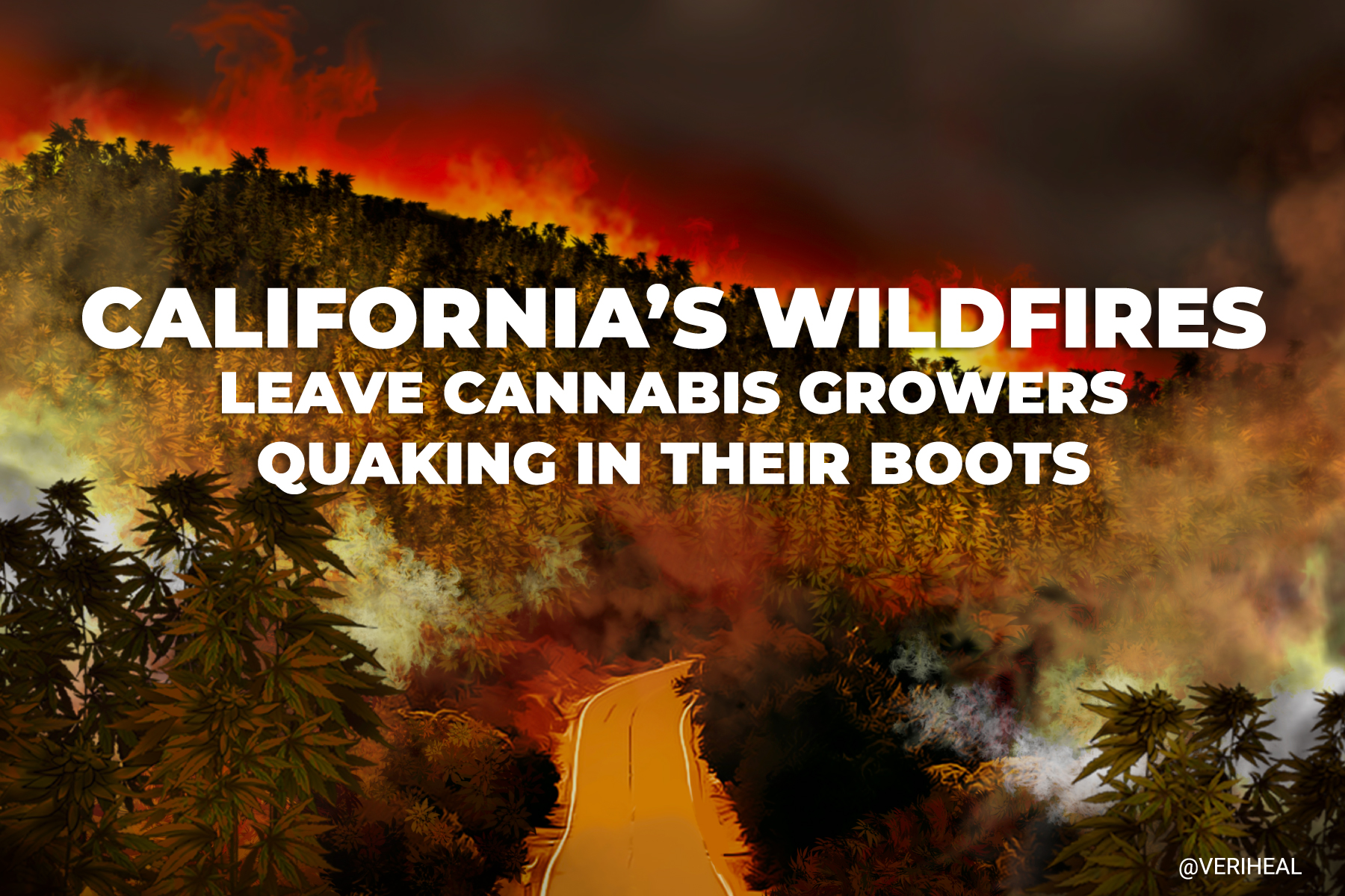 California Wildfires Leave Cannabis Growers Quaking in their Boots