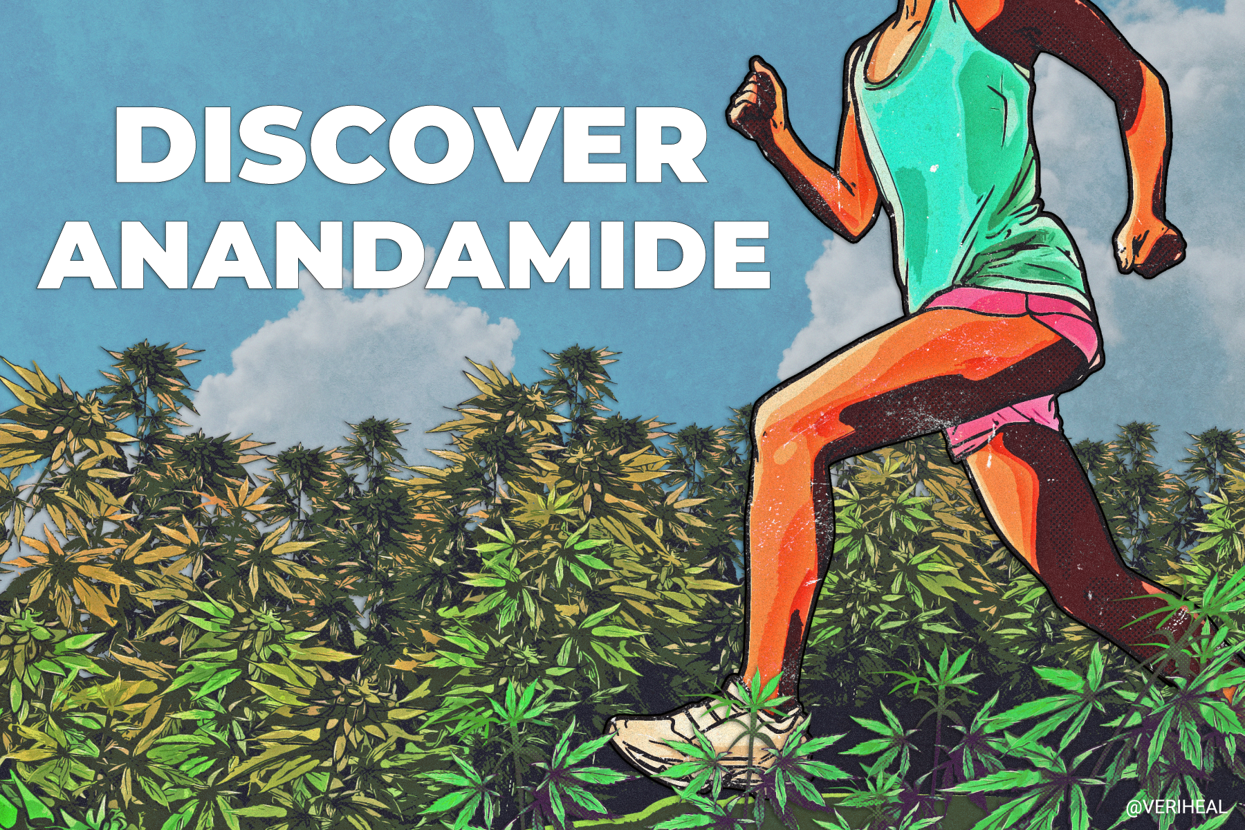 What Is Anandamide?